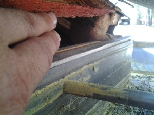 Squirrel Damage chewing in Construction Gap