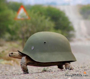 Vehicle Resistant Turtle