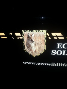 Wildlife Trapping | Wildlife Removal | Wildlife Removal