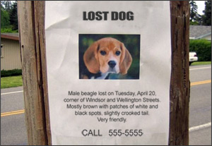 lost_dog_poster