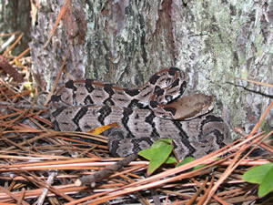 Snake Removal   Snake Trapping   Snake Relocation